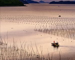 清晨,渔民从海上网鱼养殖区出航,每一次出海都是一次旅行,收获与快乐并存。