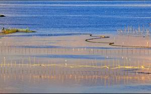 霞光轻抚着这片海,排排海面篱笆间,一群白鹭围泊歇息,好不悠闲自在。